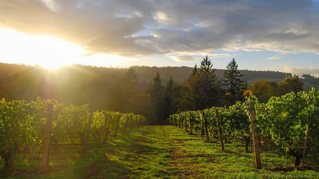 Willamette Valley Oregon Vineyards