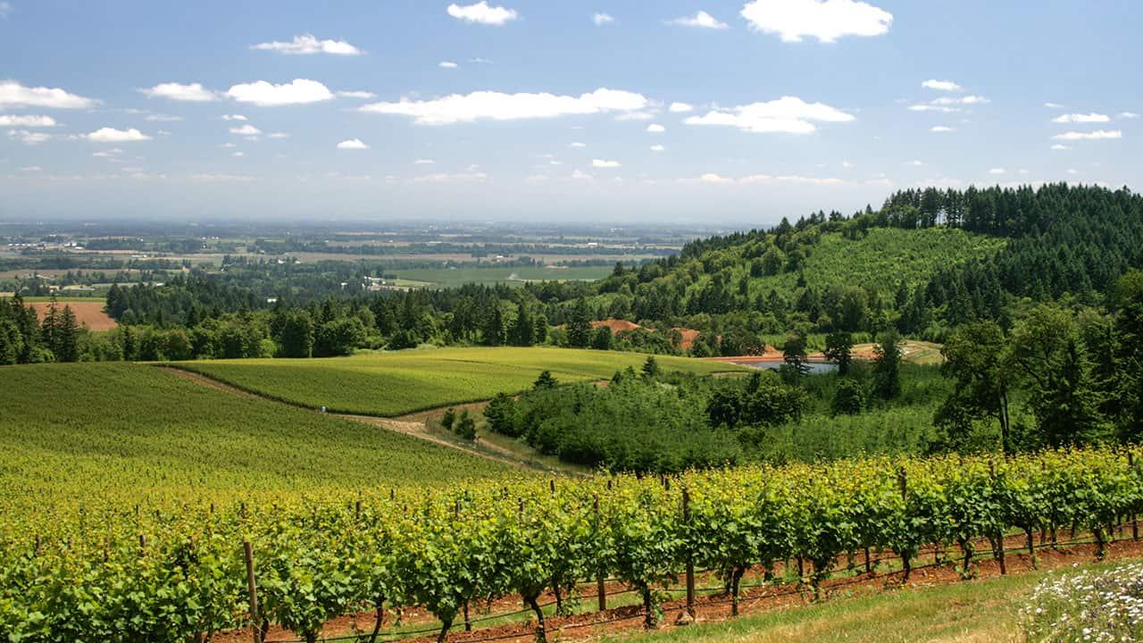 Argyle and Knudsen Winery Vineyard Views- Willamette Valley, Oregon