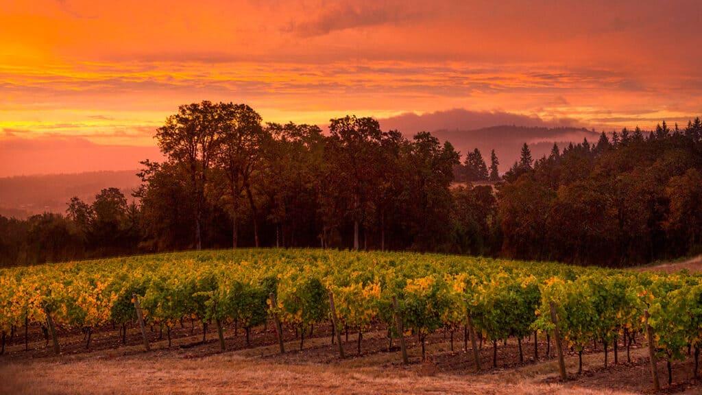 Penner-Ash Vineyards At Sunset - Willamette Valley, Oregon