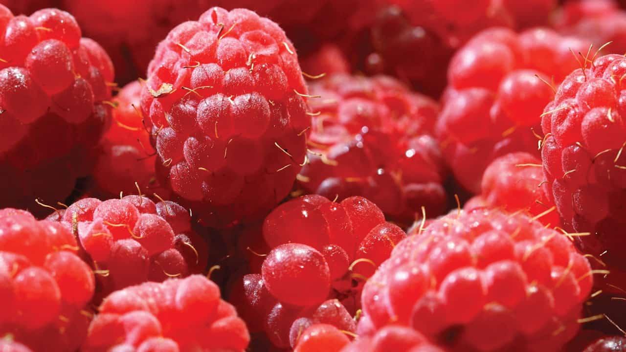 JORY Restaurant Fresh Rasberries